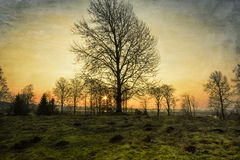 Tôt wintermorning Photo libre de droits