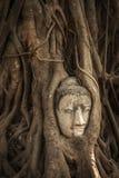 T?te de Bouddha dans des fonds d'arbre photos libres de droits