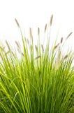 tła trawy biel Zdjęcia Stock