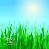 tła trawy zieleni wektor Obraz Stock