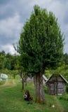 tła ulistnienia zieleni bonkrety bonkret czerwieni drzewo Zdjęcia Royalty Free