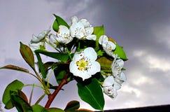 tła ulistnienia zieleni bonkrety bonkret czerwieni drzewo Zdjęcia Stock