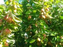 tła ulistnienia zieleni bonkrety bonkret czerwieni drzewo Obraz Royalty Free