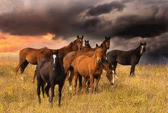 Tłum konie Zdjęcie Royalty Free