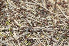 Tłum mrówki Zdjęcie Royalty Free