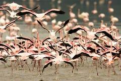 tłumu flaminga bieg Zdjęcia Royalty Free