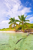 Été à un paradis tropical de plage en Floride Photo libre de droits
