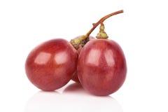 tła winogrona odosobniony czerwony biel Obraz Stock
