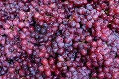 tła winogrono Zdjęcia Stock