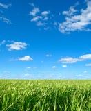 tła ziele niebo Obrazy Royalty Free