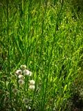 tła zieleni obrazek Zdjęcie Royalty Free