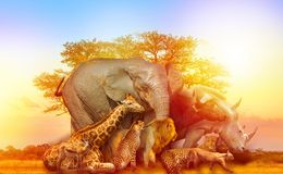 stock image of  african animals collage sunset