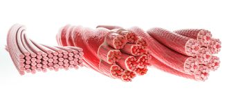stock image of  all muscle types in one picture, skeletal, cardial and smooth muscles - 3d rendering