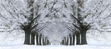 stock image of  winter snow trees, park road perspective, white alley tree rows