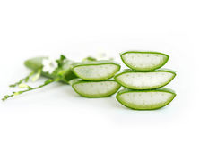 stock image of  aloe vera  very useful herbal medicine for skin treatment and us