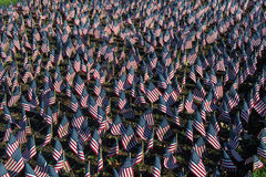 stock image of  american flags in honor of our veterans