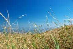 stock image of  arid grass