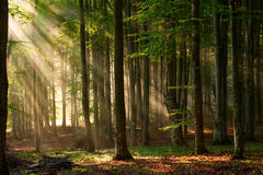 stock image of  autumn forest trees. nature green wood sunlight backgrounds.