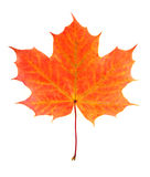 stock image of  autumn leaf