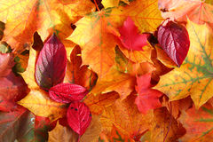 stock image of  autumn leaves in sunlight