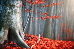 stock image of  autumn nature scene. fantasy fall landscape. beautiful autumnal park with red leaves and old trees