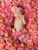 stock image of  baby in a bed of roses