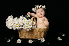 stock image of  baby in daisies
