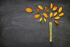 stock image of  back to school concept. top view banner of pencils next to tree sketch with autumn dry leaves over classroom blackboard background