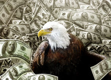 stock image of  bald eagle in money