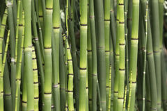 stock image of  bamboo