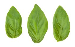 stock image of  basil leaves