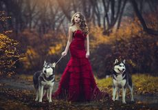 stock image of  a beautiful blonde girl in a chic red dress, walking with two husky dogs in an autumn forest.
