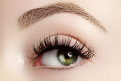 stock image of  beautiful female eye with extreme long eyelashes, black liner makeup. perfect make-up, long lashes. closeup fashion eyes