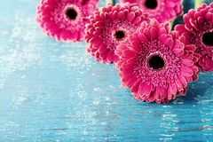 stock image of  beautiful spring greeting card for mother or womans day with fresh gerbera daisy flowers on vintage turquoise background.