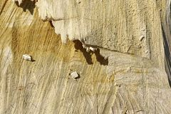 stock image of  beige fine grained textured wood trunk of a cutted tree