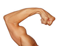 stock image of  biceps