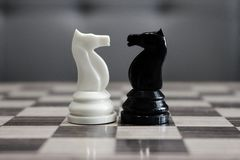 stock image of  black and white chess horses in front of each other as challenge and competition concept.