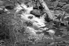 stock image of  black and white image of a woodland stream in woods