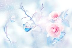stock image of  blue butterfly in the snow on pink roses in a fairy garden. artistic christmas image.