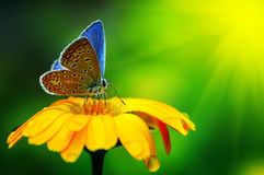 stock image of  blue butterfly