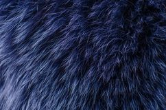 stock image of  blue fur macro