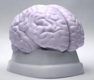 stock image of  brain