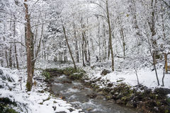 stock image of  brook flowing