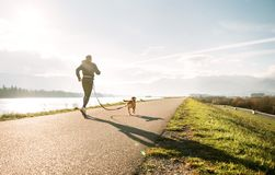 stock image of  canicross exercises. outdoor sport activity - man jogging with his beagle dog