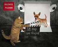 stock image of  cat with dog in studio