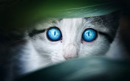 stock image of  cat
