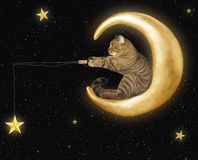 stock image of  cat on moon catches stars