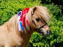 stock image of  champion pony
