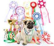 stock image of  champion winning dog
