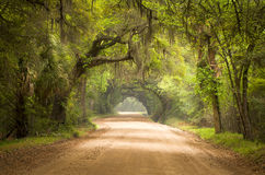 stock image of  charleston sc dirt road forest deep south moss